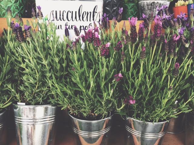 Chelsea Lanee Photogrpahy-lavendar